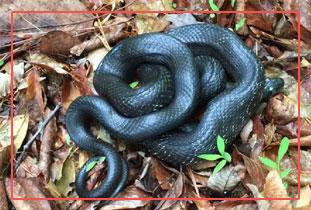 snake-management